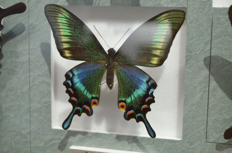 nawa_insect_museum