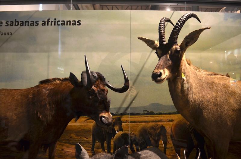マドリード散策、国立科学自然博物館