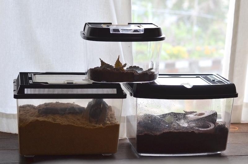 2018 東京 国立化学博物館昆虫展