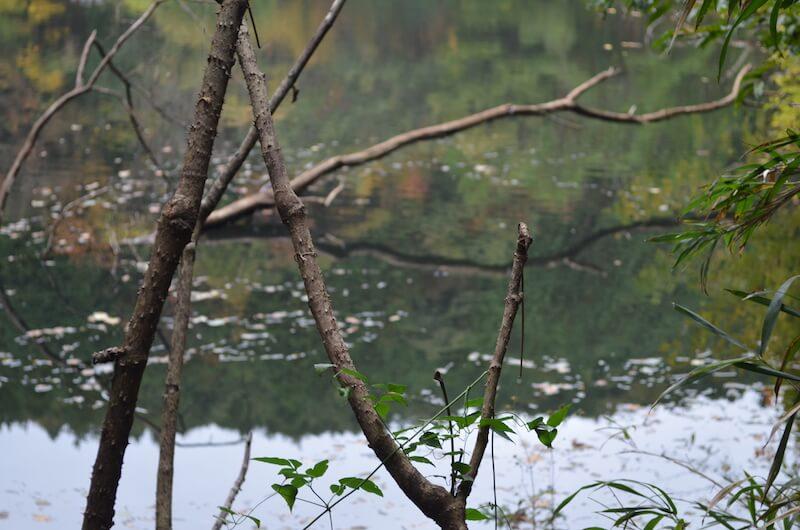 多治見 土岐川観察館開催イベント 探鳥会に参加しました